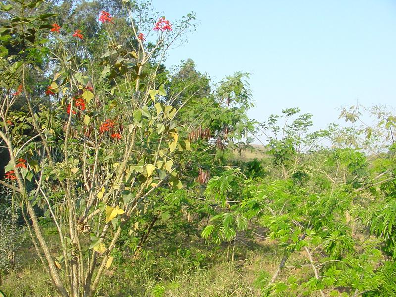 Recuperação de áreas mineradoras com plantio de espécies nativas